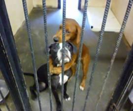 perros abrazados
