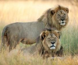 Cecil-Jerico-Zimbabwe