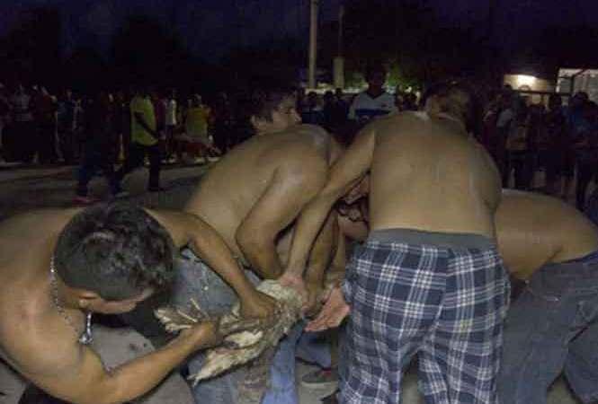 Torturan Animales en Yucatán