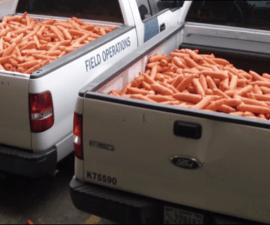 zanahoriasverdes