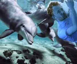 dolphinyorke1