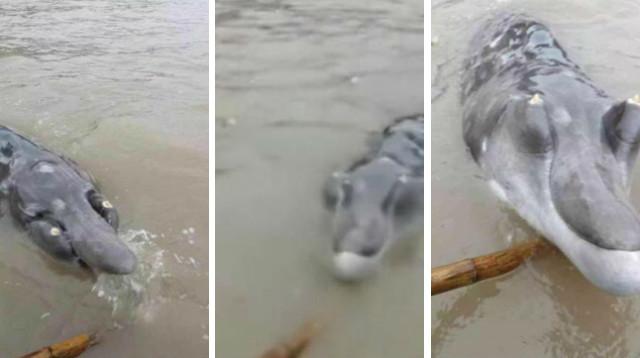delfin-cocodrilo-2