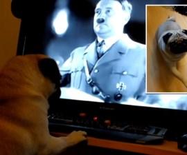 nazi dog