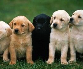 perros-chicle-peligro