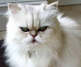 gato-rehenes