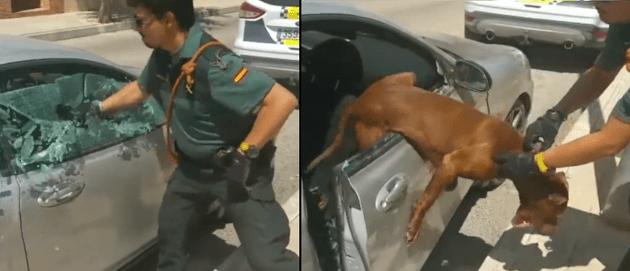 policia-salva-perro
