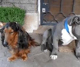 perros-reganados-videos-virales