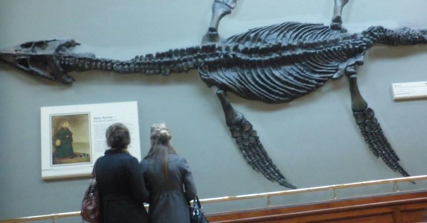 Ictiosaurio Fósil 2