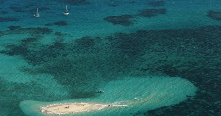 La Gran Barrera de Coral en Australia aún no está muerta, pero sí muy enferma