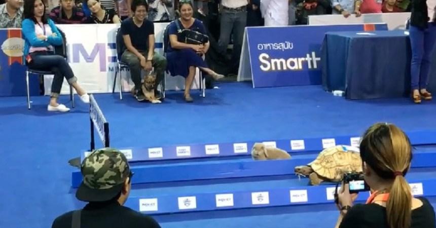 tortuga-liebre-carrera