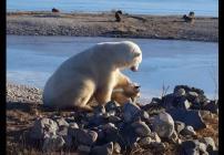 oso-polar-perro-video