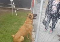 Zuzu, la perrita que fue rechazada