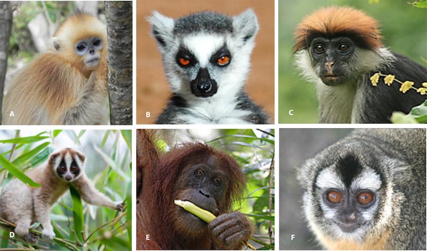 Primates en peligro de extincion