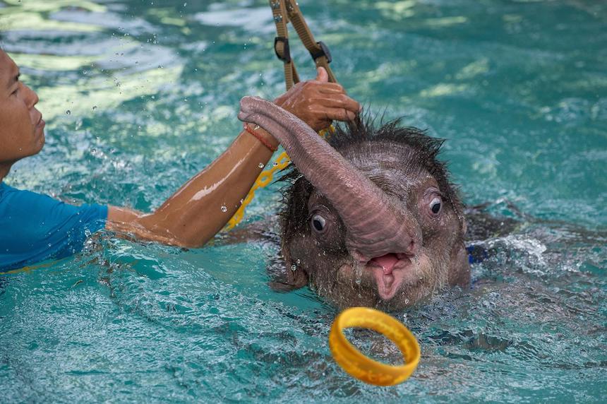 Elefante bebé - Anillo