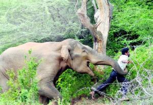 Karma instantáneo: cazadores son atacados ferozmente por elefantes