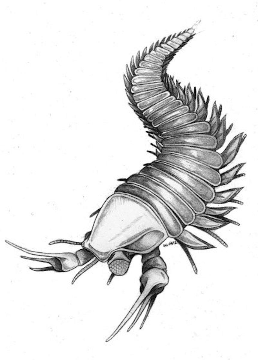 Escorpión - Johny Depp