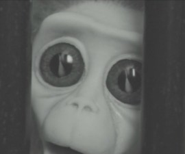 Monkey Love Experiment