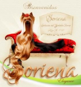 Soriena-Yorkshire-Terrier-Bienvenidos1-281x300 Inicio