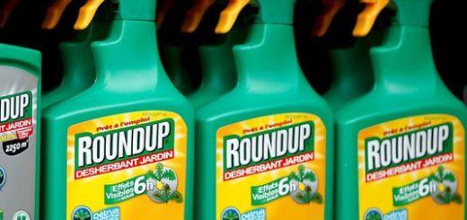 Le round up est le célèbre désherbant à base de glyphosate de monsanto. Image Le Monde