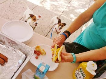 picnicwiththepets