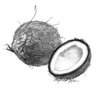 bbb-coconut-Julio-Figuroa