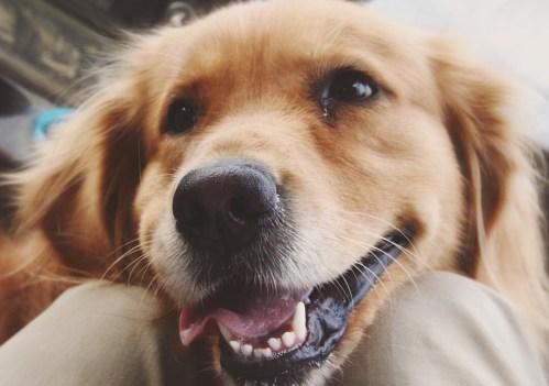 Fulgurant Female Sourn Dog Names Sourn Dog Names Sounds Like Nashville Ca Sourn Dog Names Sourn Dog Names