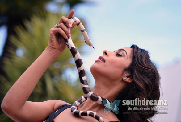 bollywood actress mallika sherawat stills 9 Mallika Sherawat Photo Gallery