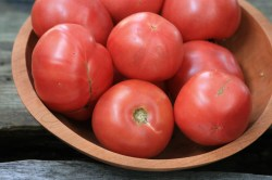 Small Of Arkansas Traveler Tomato