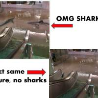 "How to tell if a ""shark in flooded city streets after a storm"" photo is a fake in 5 easy steps"