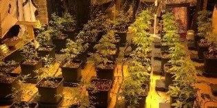 Police find cannabis farm in Middleton