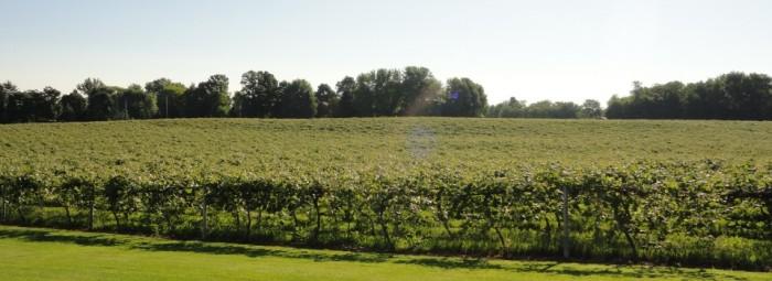 Mick Klug Farm