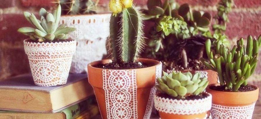 Tendance cactus : ajouter une touche de piquant à sa déco d'intérieur