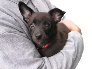 Doggy Hug!!