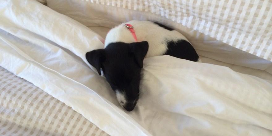 Willow pup sleeping