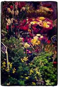 Flowers - Marché d'Aligre