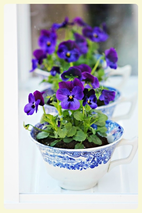 Gorgeous pansies in teacups. Featured by LE CHEMIN ABA, learning house for children with autism, in Paris, France.