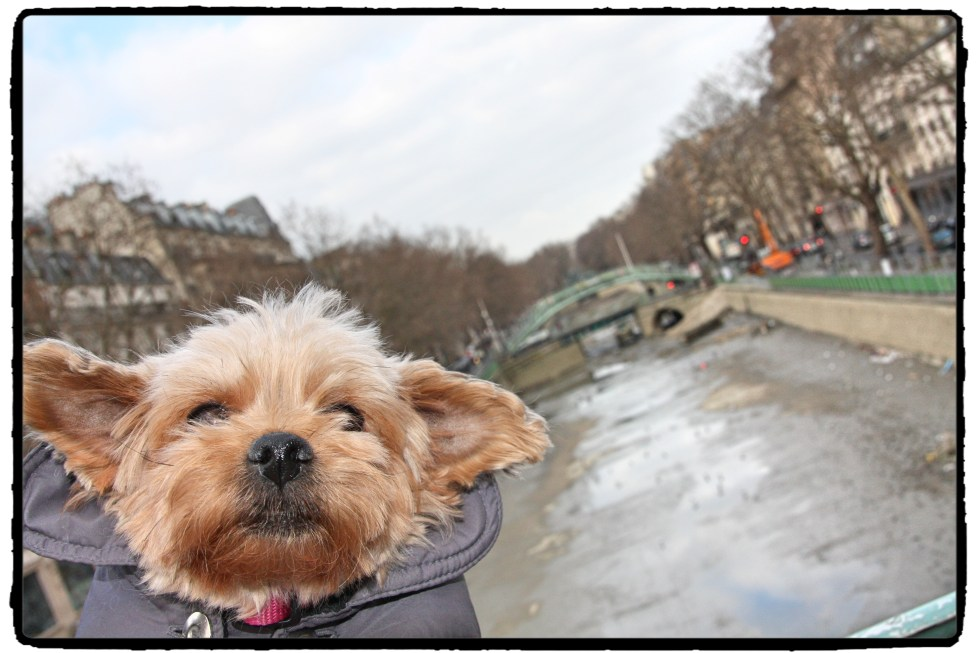 Dog selfie! Violette : therapy yorkie for children with autism at LE CHEMIN ABA, learning center for children with autism in Paris, France.