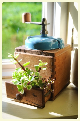 Planting in an antique coffee grinder. Featured by Special Learning House. www.speciallearninghouse.com..jpg