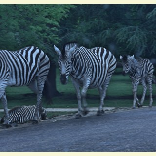 The Thoiry Zoo + zoo themed activities for autistic children