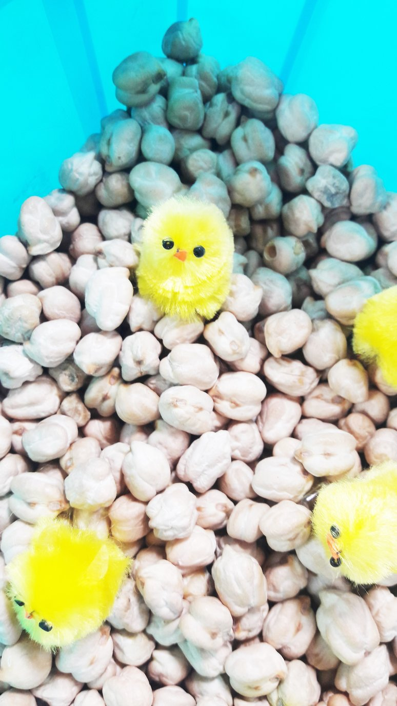Spring Chicks Sensory Box for Kids with Autism. Help your child calm down, self-regulate and concentrate. | speciallearninghouse.com