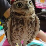 4 Therapy animals for special needs kids that you will immediately fall in love with