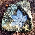 Maple leaf carved stone bird bath