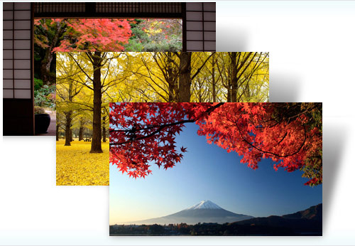 Japan autumn windows theme Autumn Color in Japan  New Windows 7 theme free download