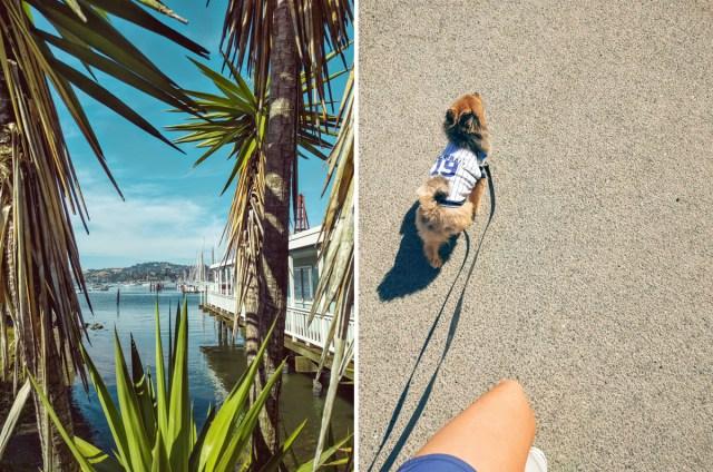 Palm-trees-dog-walk