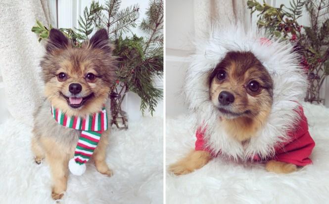 Alfie-Christmas