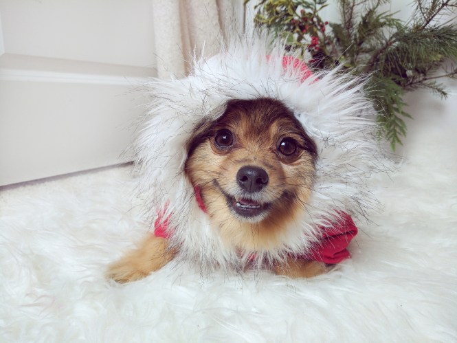 Merry-Christmas-Love-Alfie2