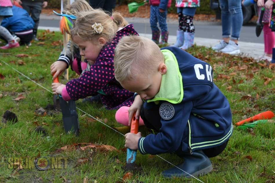 Bloembollen gepoot in Spijk