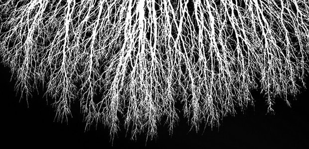 Roots, image by Peter Rosbjerg