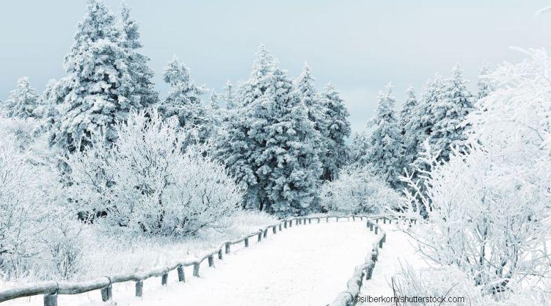 Winter_Silberkorn_Shutterstock_COK