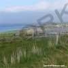 Flotta coastline